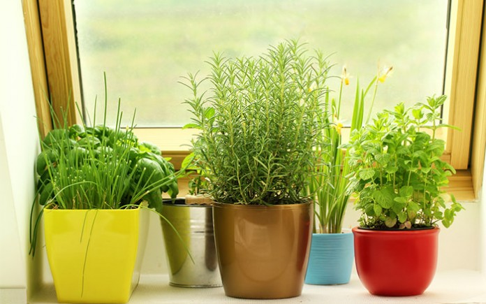 DIY Indoor Window Gardens 16
