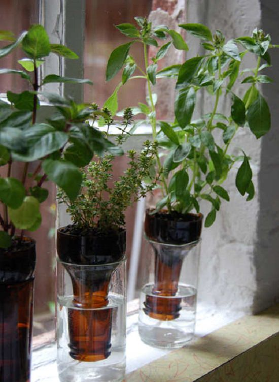 DIY Indoor Window Gardens 3