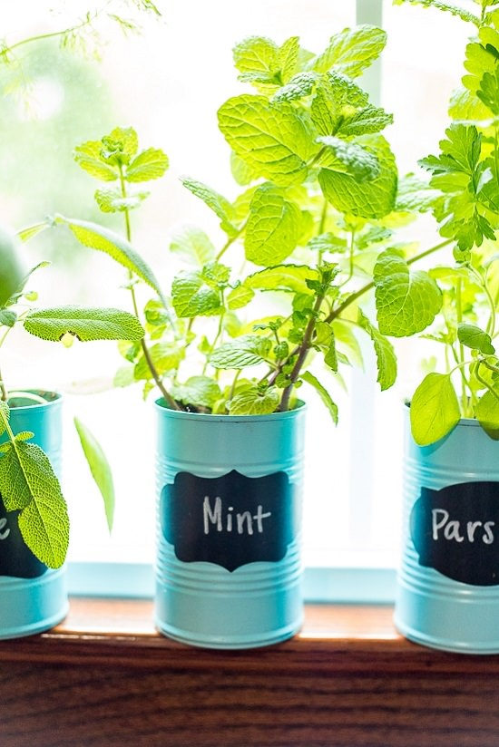 DIY Indoor Window Gardens 4