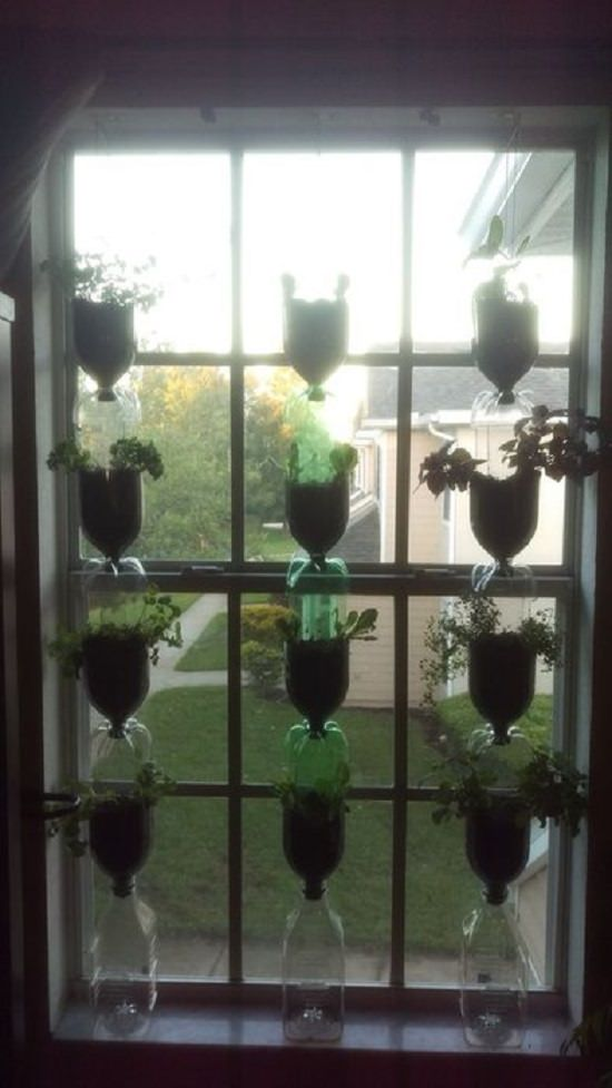 DIY Indoor Window Gardens 6