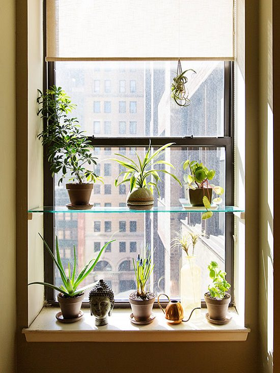 DIY Indoor Window Gardens 8