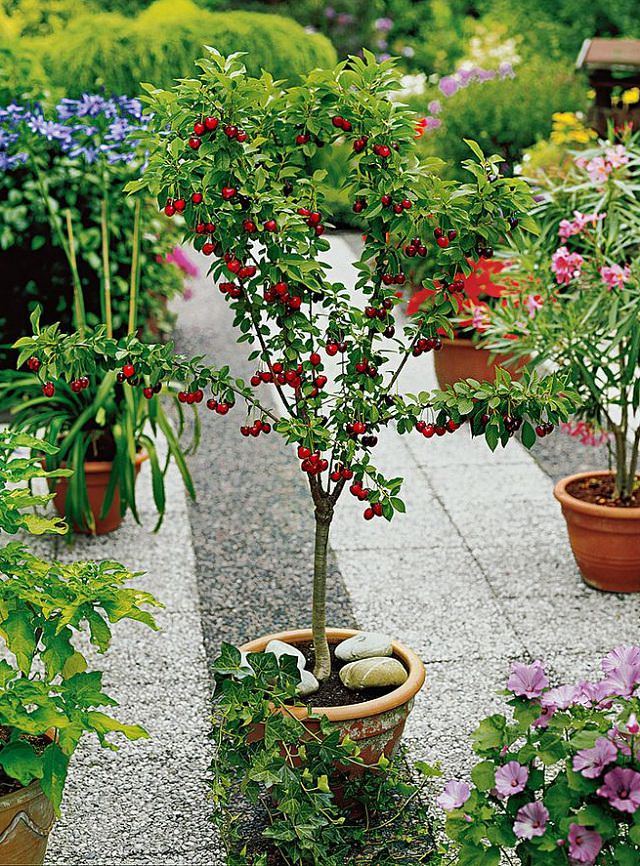 Fruits To Grow In Containers 7