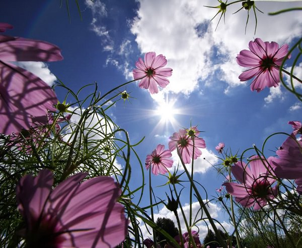 How To Make Plants and Flowers Bloom 4