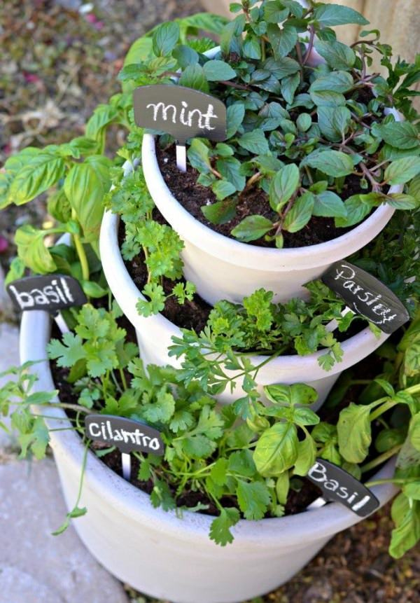 Indoor Small Herb Gardens