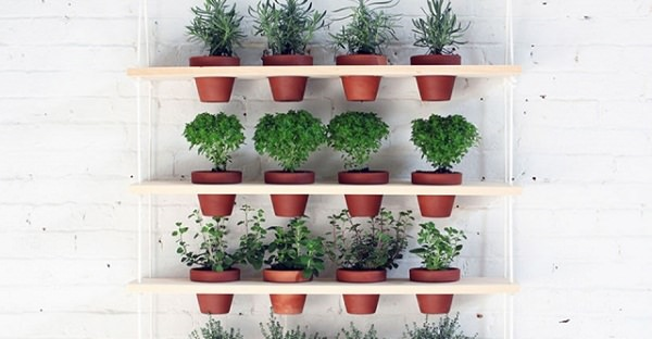 Indoor Small Herb Gardens 11