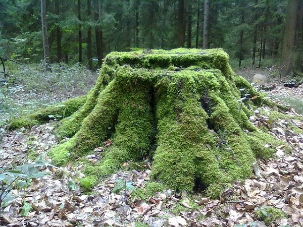 Tree Stump Decorations 6