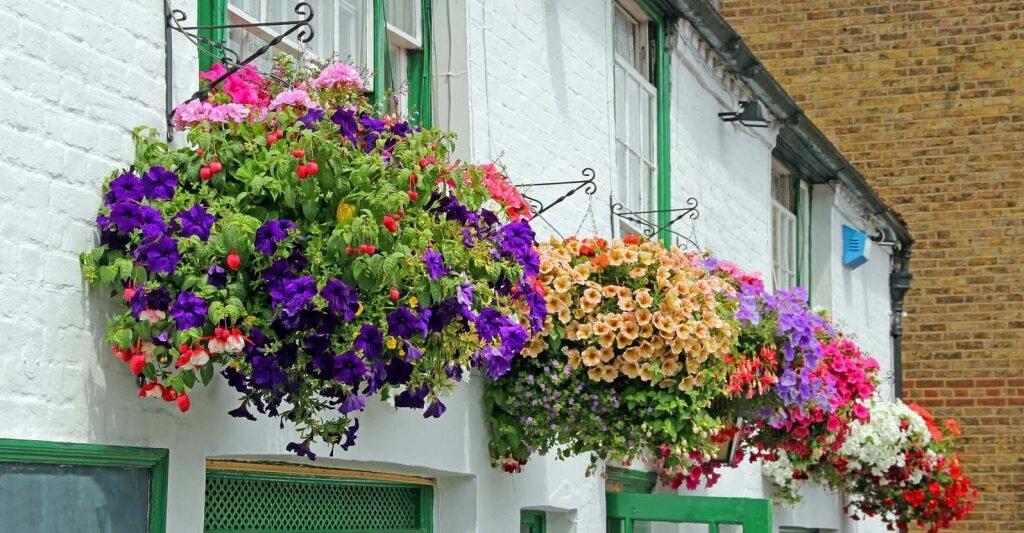 flowers for balcony garden-Begonia