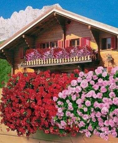 flowers for balcony garden-Dianthus