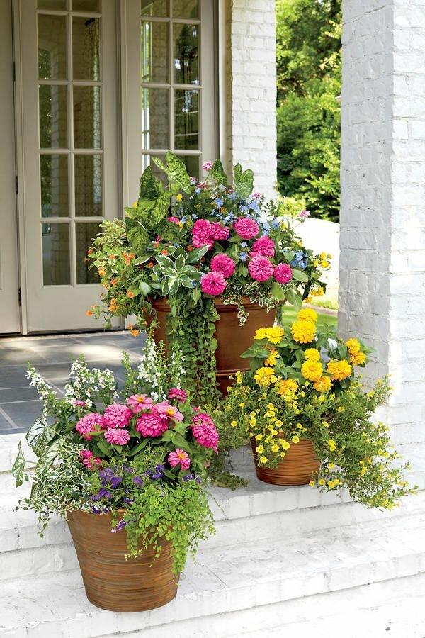 flowers for balcony garden-Zinnia