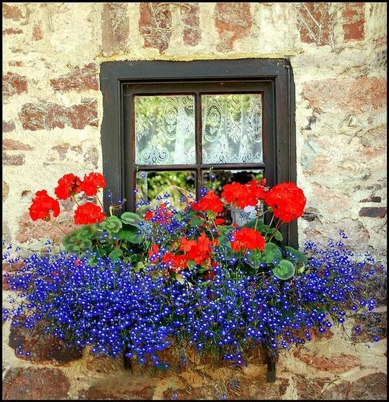flowers for balcony garden-lobelia