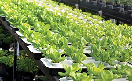 How To Grow Arugula In Containers Successfully 13