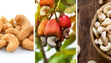 How to Grow Cashew
