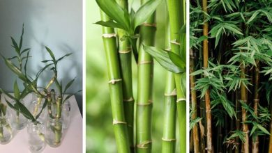 How to Grow Bamboo from Cuttings