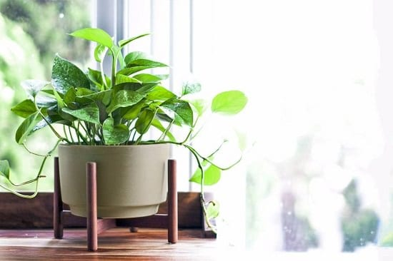 11 Plants that Attract Money and Bring Fortune to Home