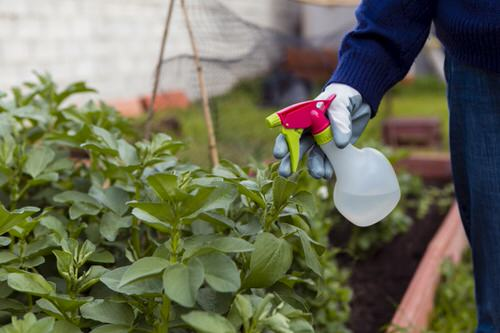 10 Hacks Master Gardeners Would Never Tell You